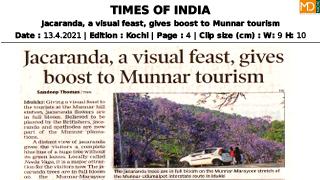 Jacaranda, a visual feast, gives boost to Munnar Tourism