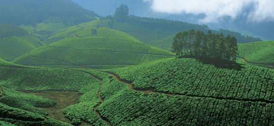 kerala vacation package, kerala package vacation, kerala vacation, kerala trip, from, chennai, bangalore, hyderabad, delhi, pune