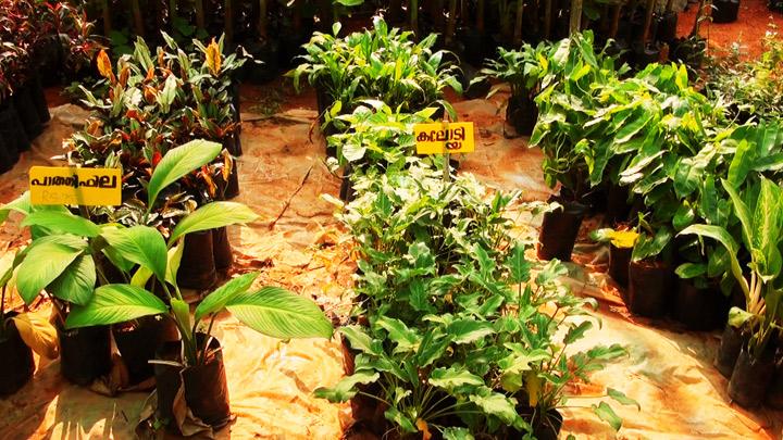 Boys town - a herbal garden