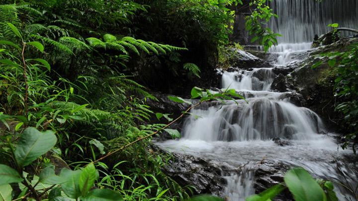 Chethalayam Falls, Wayanad