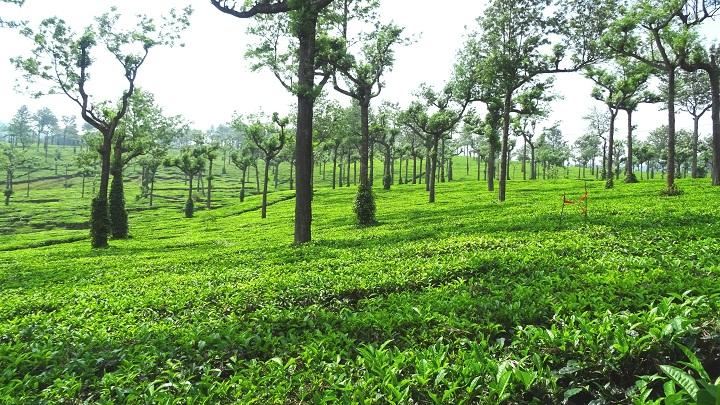 Chithirapuram - A Hill Town in Munnar, Idukki