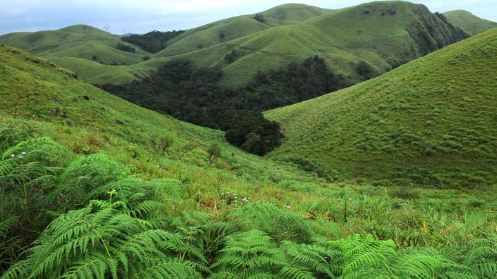 Image result for gavi kerala
