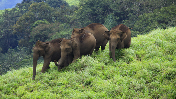 Idukki Wildlife Sanctuary in Kerala