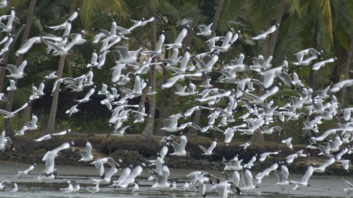Kadalundi Bird Sanctuary in Kozhikode