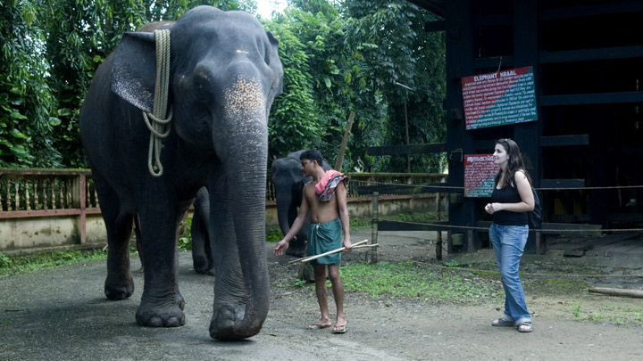 Kodanad - one of the largest elephant training centres in Kerala