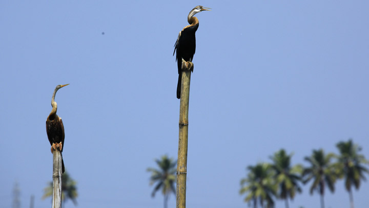 Kumarakom Bird Sanctuary in Kottayam