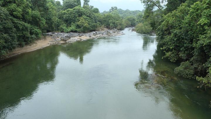 Nedumkayam Rainforest, Malappuram