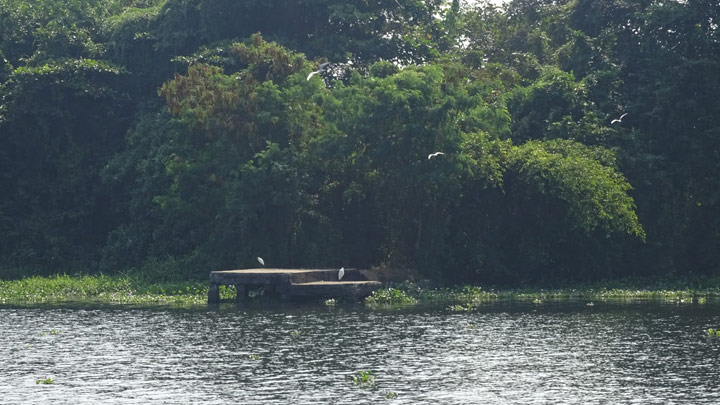 Pathiramanal, a small island on the backwaters of Alappuzha, Alleppey