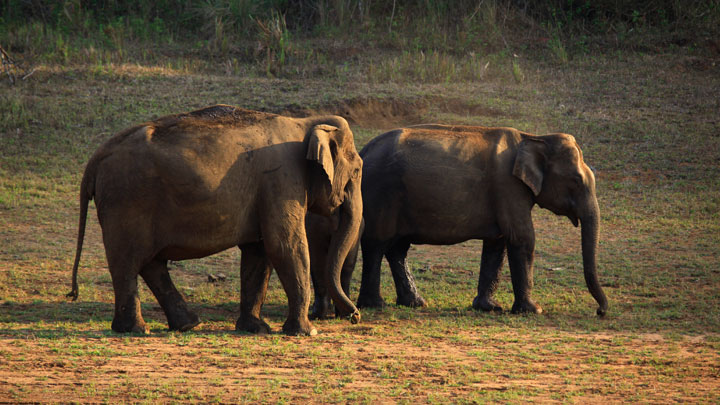 Periyar Tiger Reserve, Thekkady