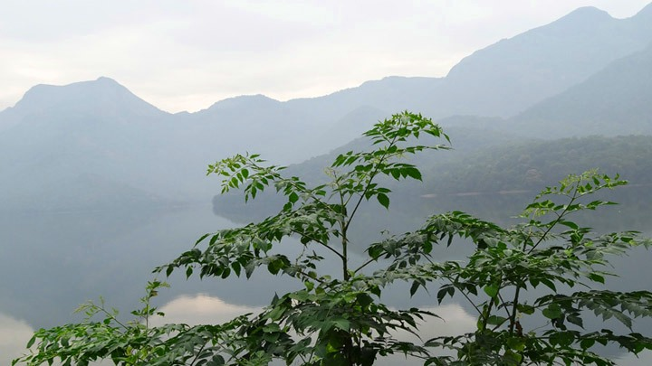 Pothamedu - Offers Plantation view of Munnar, Idukki