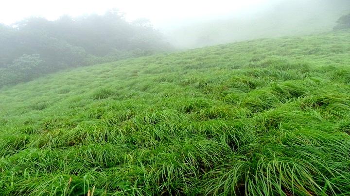 Pythal Mala or Paithalmala – a trekking site in Kannur