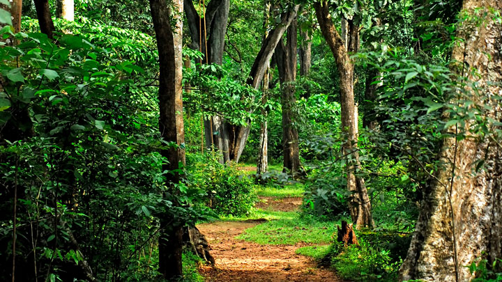 Shendurney Wildlife Sanctuary & Trekking and Camping programmes at Kollam