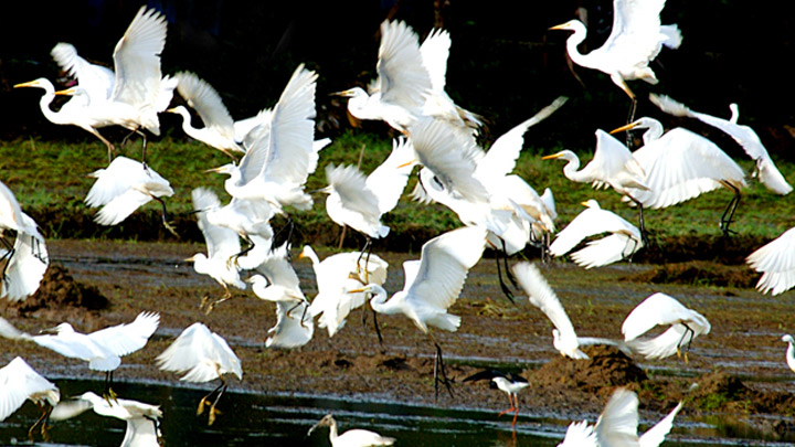 Thattekkad Bird Sanctuary