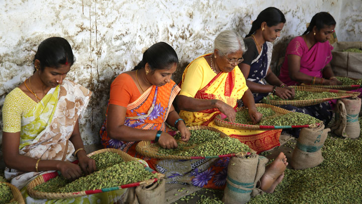 Vandanmedu -  world's largest auction centres for cardamom, Kumily, Idukki