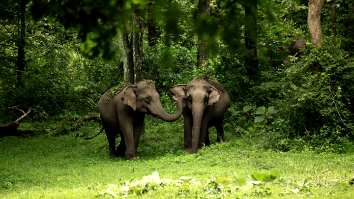 Wayanad Wildlife Sanctuary - an integral part of Nilgiri  Biosphere Reserve, Wayanad