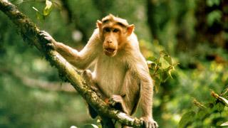 محمية أرلام للحياة البرية