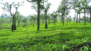 Chithirapuram - a Hill Town in Munnar