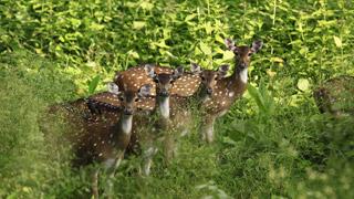 محمية موثانغا للحياة البرية