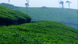 Peeru Hills in Idukki