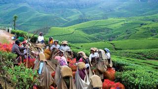 Museo del té en Munnar