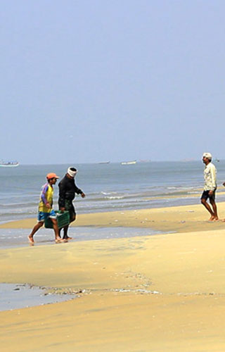 شاطئ تشافكاد