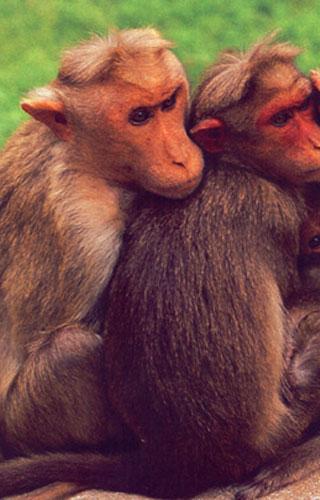 चिम्मिनी वन्यजीव अभयारण्य