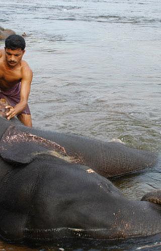 Kappukadu in Thiruvananthapuram