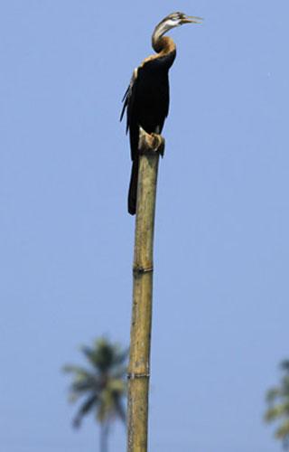 محمية الطيور كوماراكوم