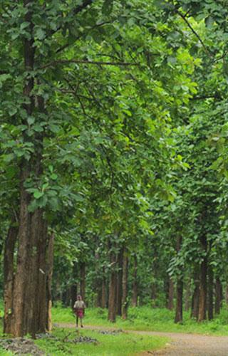 Nilambur Teak Plantation in Malappuram