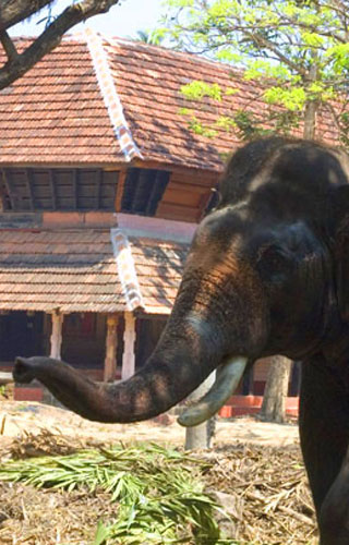 Punnathoor Kotta : A centre for Captive Elephants