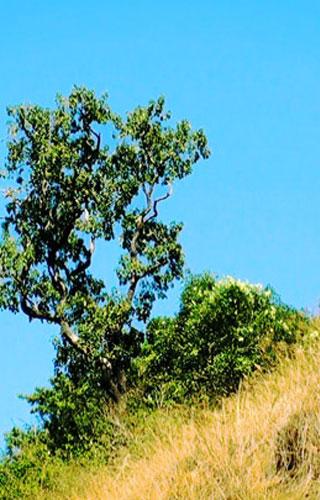 Национальный парк Тихая Долина в Палаккаде