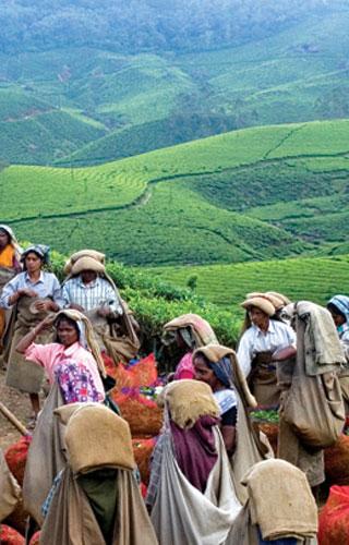 Musée du thé à Munnar