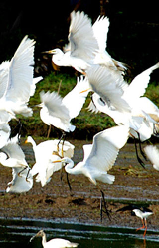 થટ્ટેકકાડુ પક્ષી અભયારણ્ય, એર્નાકુલમ