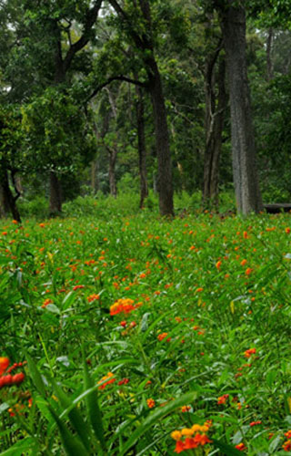 Tholpetty Wildlife Sanctuary, Wayanad