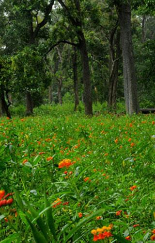 ثولبيتي محمية للحيوانات البرية، ويناد