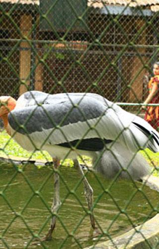Zoo in Thrissur
