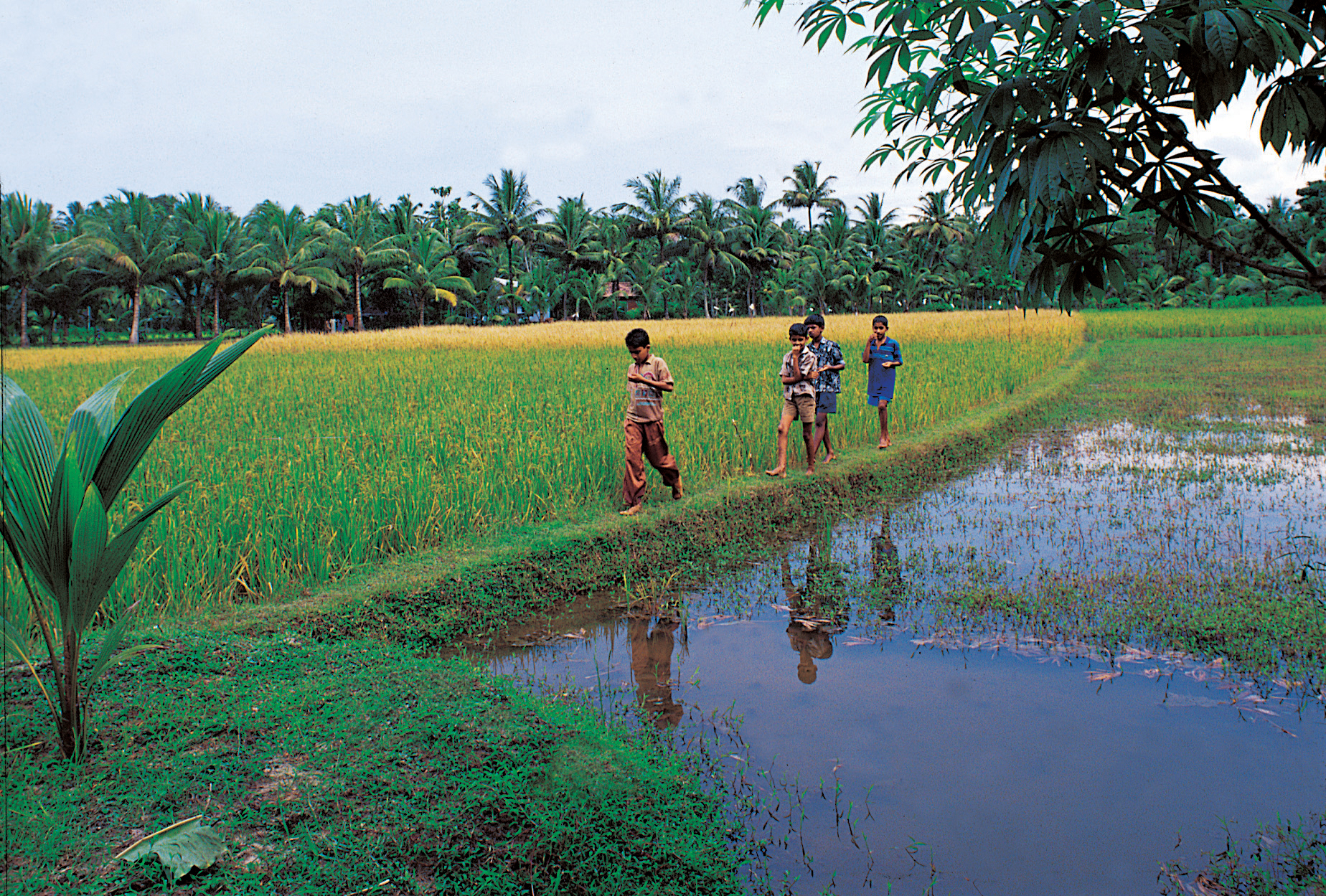 tourism in kerala Tourism of kerala: explore things to do, places to visit, best time to visit, how to reach, history & culture of kerala to plan your trip.