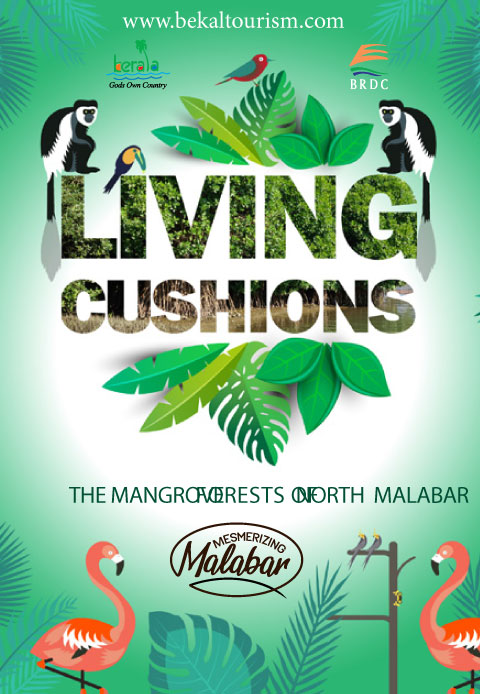Living Cushions, the Mangrove Forests of North Malabar