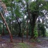Kannavam forest views