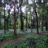 Trekking trails of Kanavam