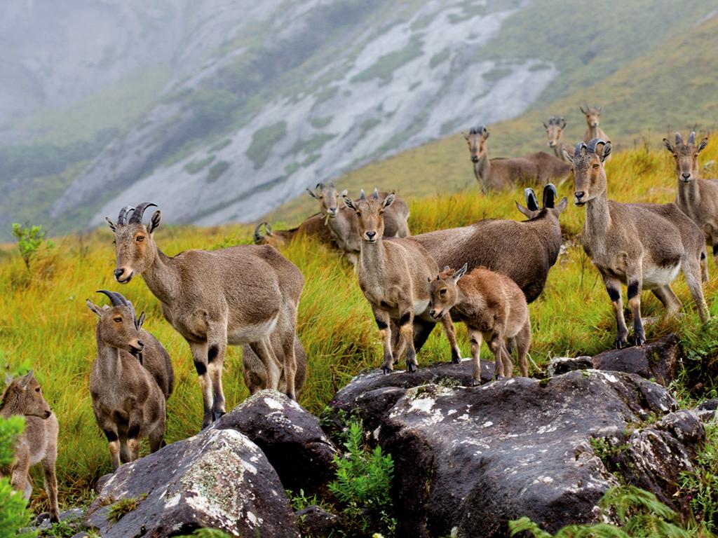 Eravikulam National Park and Eco tourism Activities ...