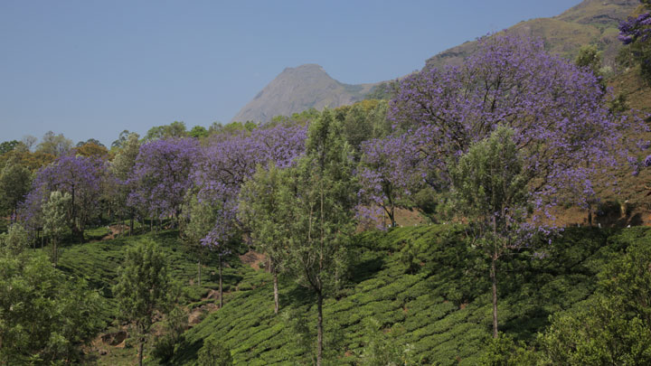 Escape Farm and Kanthalloor - the apple valley of Kerala at Munnar