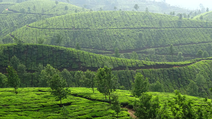 The heaven of hills - Devikulam