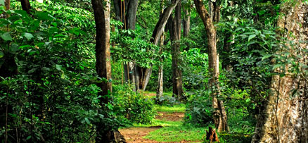 Rosemala – An Eco Tourism Spot in   Shenduruney Forest, Kollam