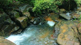 Trek to Sankhili forest in Kollam