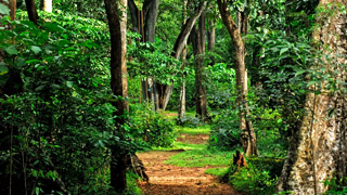 Shenduruny Wildlife Sanctuary. - Green, Wild and Alluring