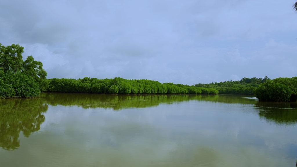 Kumbla Estuary & Mangrove Forest