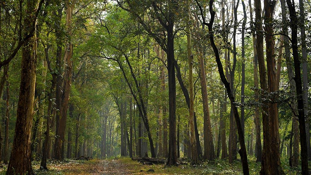Nedumkayam Rainforest