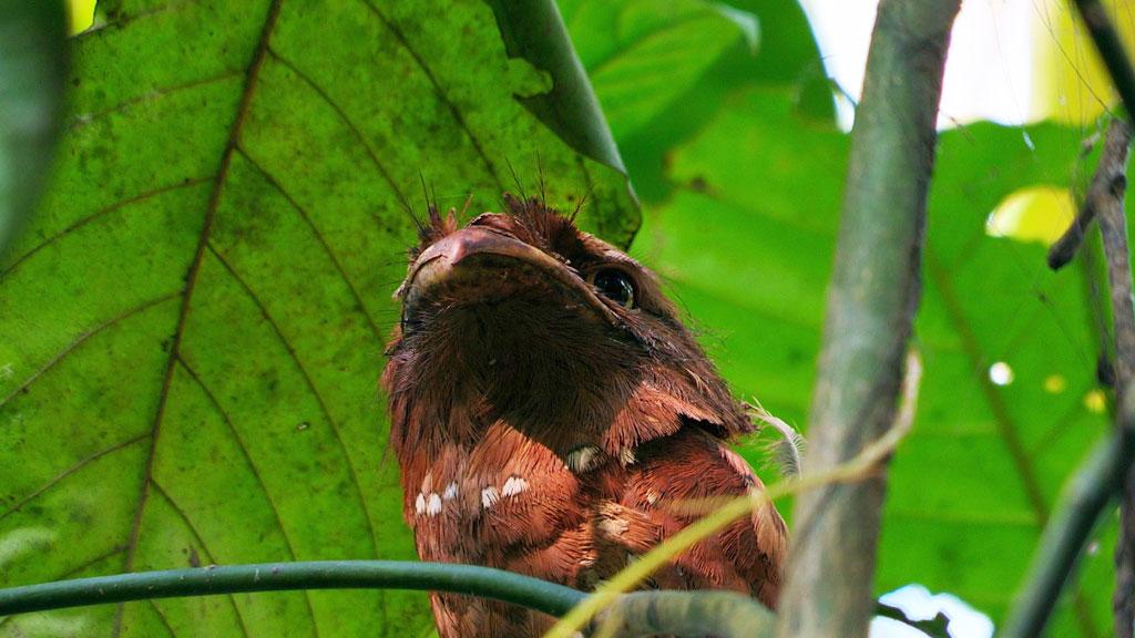 Thattekad Bird Sanctuary- A Birding Haven
