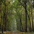 Nedumkayam Rainforest - Unshackle Yourself Here